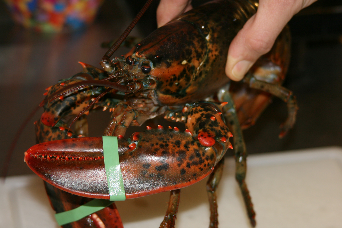 Essex Girl Cooks Healthy Low Cholesterol Lobster At Home